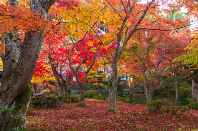 【京都紅葉2018】インスタグラムのリアルタイム投稿